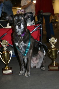 Sure it feels good when you place high and earn awards.  But they are not necessary to be successful with your dog!