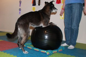 Risa absolutely loves playing with the exercise ball.  In fact, her enthusiasm often rolls it over!